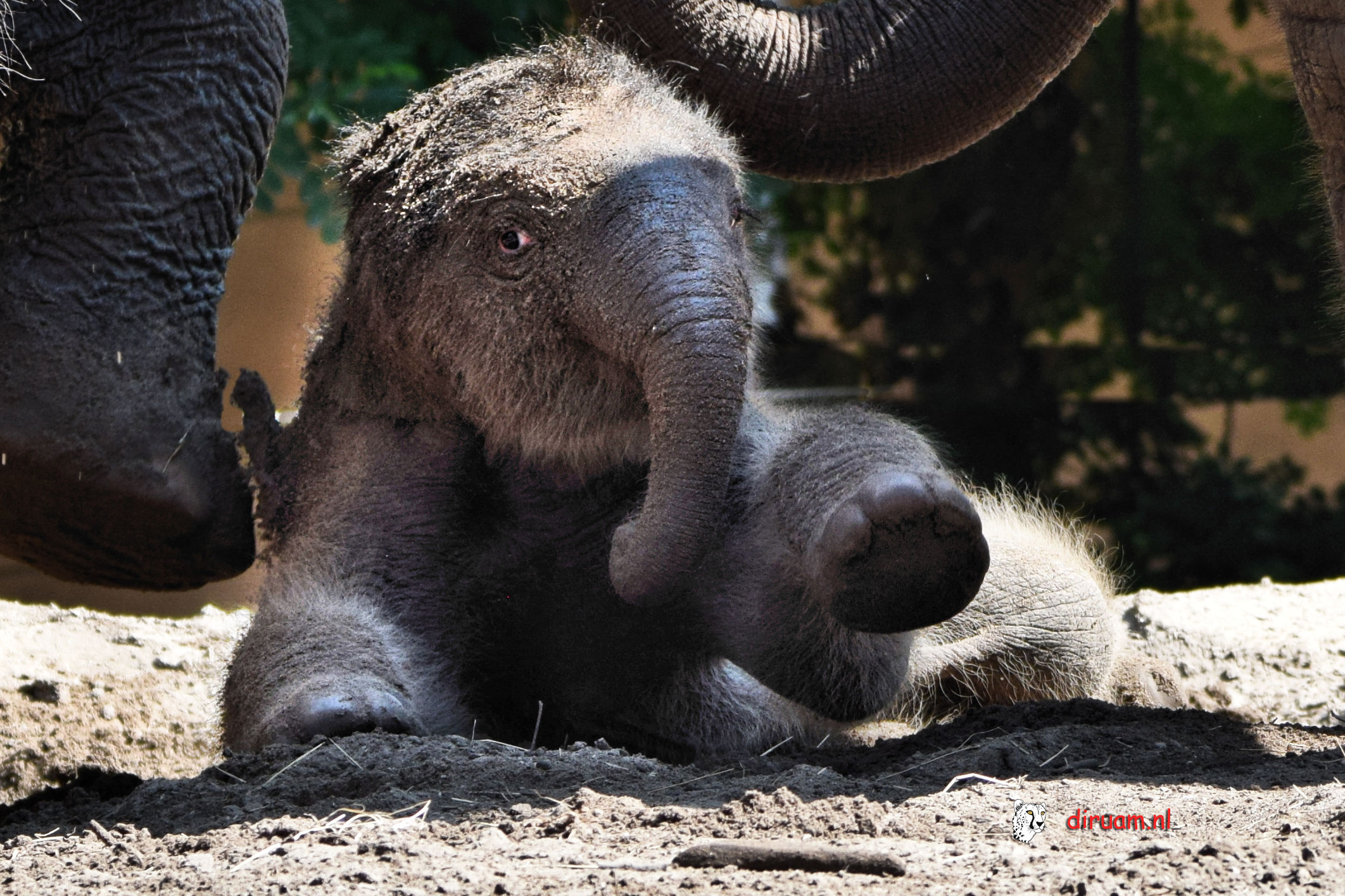 olifantje 5